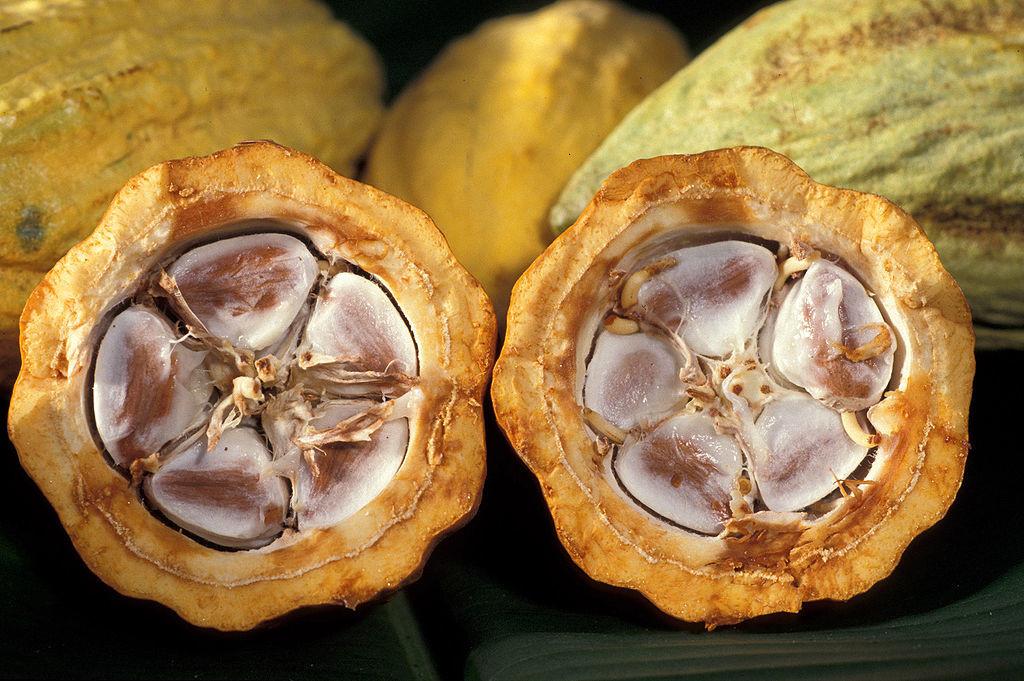 1024px-Cacao-pod-k4636-14